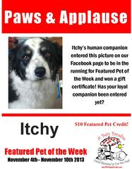 Featured Pet of the Week